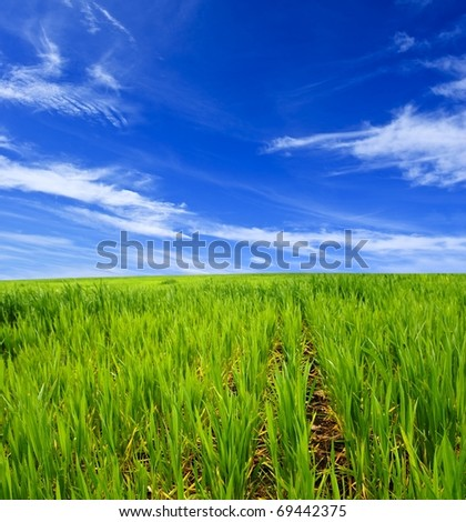 green spring field - stock photo