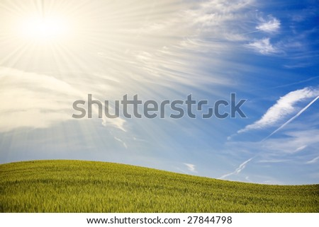 Green spring field with blue sky and shiny sunrays