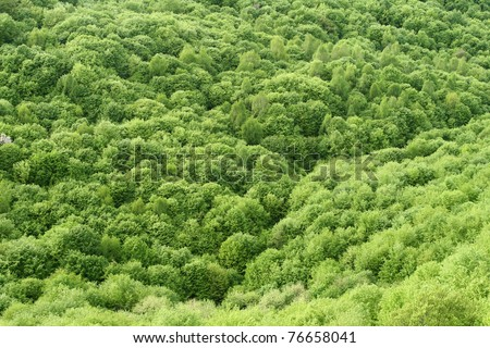Green spring forest seen from above