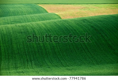 Green spring landscape field with abstract shapes ans colors