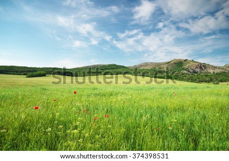 Green spring meadow in mountain. Composition of nature.