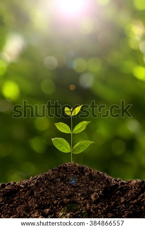Green sprout growing  #384866557