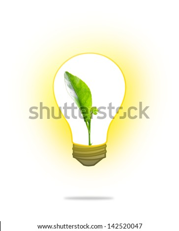 Green sprout growing from seed in light bulb on white