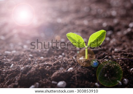 Green sprout growing from seed in organic soil #303853910