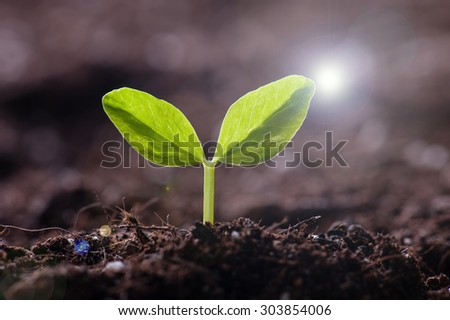 Green sprout growing from seed in organic soil #303854006