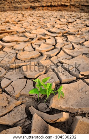 Green Sprout growing in dried land