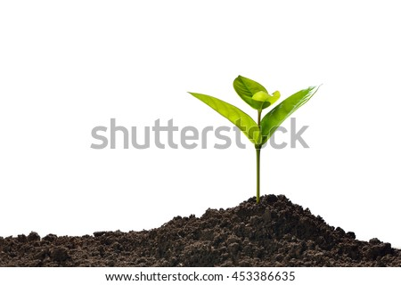 green sprout growing out from...
