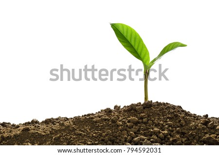 Green sprout growing out from soil isolated on white background #794592031