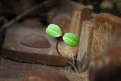 Green sprout grows in a scrap metal dump. A young sprout grows in a polluted environment. A sprouted sprout on a background of rusty piece of iron and garbage