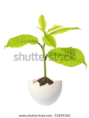 Green sprout in an egg on a white background