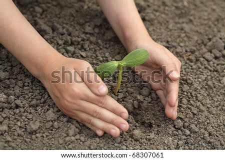 green sprout  in child hand - Shutterstock ID 68307061