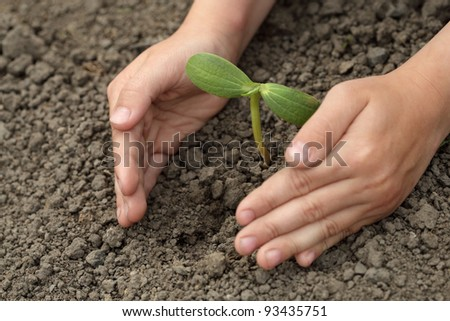 green sprout  in child hand - Shutterstock ID 93435751