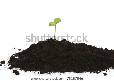 Green sprout in heap of earth