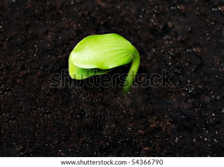 Green sprout in the ground, high resolution