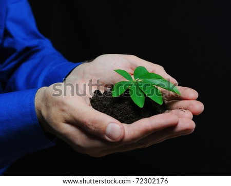 Green sprout in the men's hands on a black background