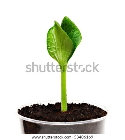 Green sprout in the pot, high resolution