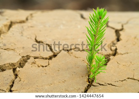 Green sprout of a tree grows on the desert land. dry cracked earth. Desert and desert landscaping. Green sapling and dry ground. Deep cracks from drought. Drought and sand.