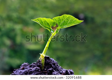 Green sprout on a green background