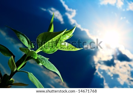 green sprout on background blue sky