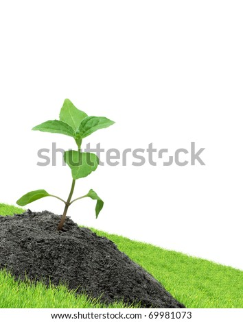 Green sprouts isolated  on a white background