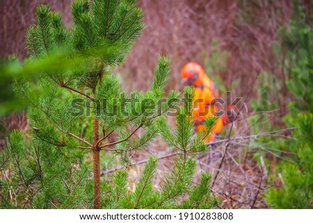 Green spruce seedling grows in the forest. In the background, forest worker is working with trimmer. Forest care work. Forestry and afforestation. Selective focus Stock photo ©