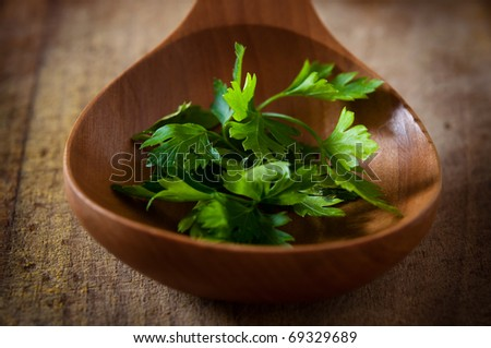 green stalks of parsley on wooden spoon