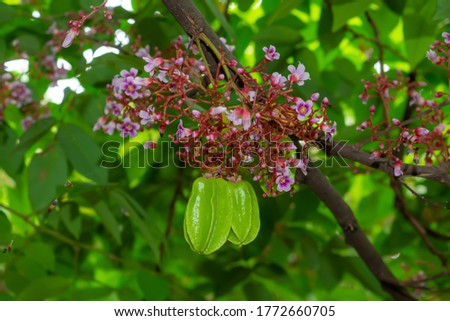 Green star fruit along with its flowers on tree.  Blurred nature background. Сток-фото ©