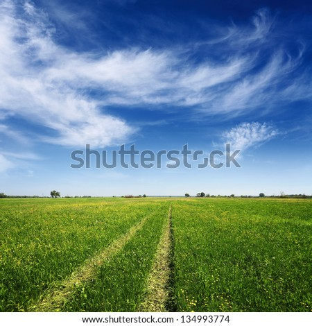 green summer field with tracks of car on grass and blue cloudy sky