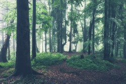 Green summer forest at misty rainy day. Woodland nature