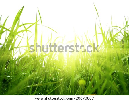 green summer grass and sun