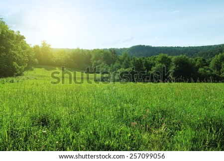 Green summer landscape forest and meadow with blue sky #257099056