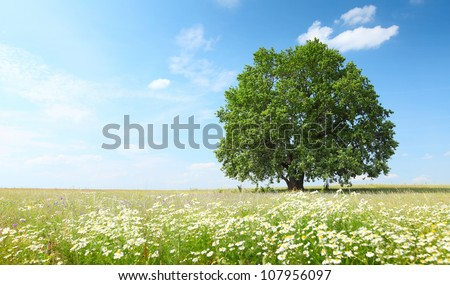 Green summer meadow with flowers and herbs and big oak tree