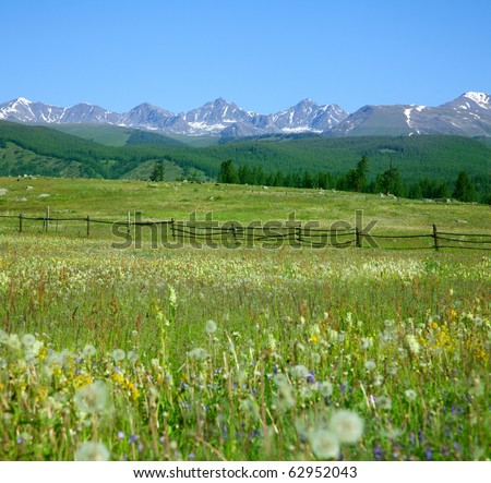 Green summer pasture and snowy peaks in the background