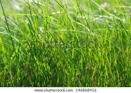 green summer shining grass in sunlightg. bright nature backgrounds