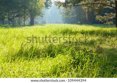 Green sunlit glade. Morning Landscape