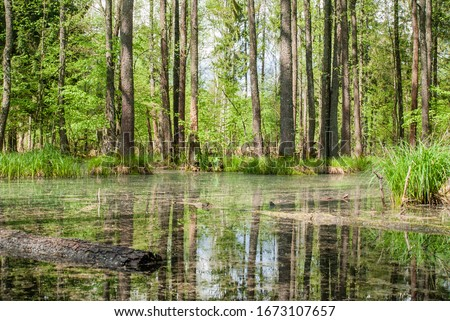 Photo of  Green swamp in the forest. Landscape image on sunny summer day. Stock photo