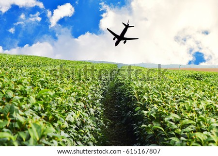 Green Tea Farm, Tea Plantation in thailand with  silhouette of plane #615167807