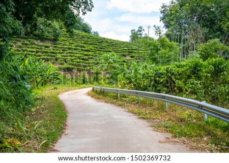 Green tea garden inland island Hainan in China