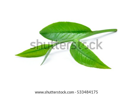 Green tea leaf isolated on white background #533484175