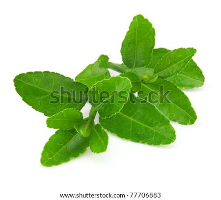 Green tea on a white background