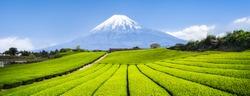 Green tea plantation near Mount Fuji, Shizuoka Prefecture, Japan
