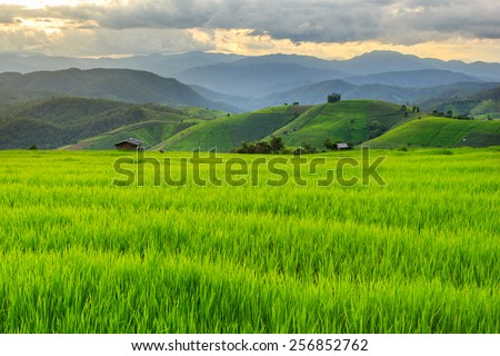 Green Terraced Rice Field in Pa Pong Pieng , Mae Chaem, Chiang Mai, Thailand ストックフォト ©