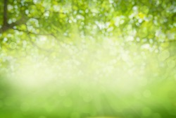 Green texture background, Photos blurred and bokeh under the tree, Fresh nature healthy or bio concept.