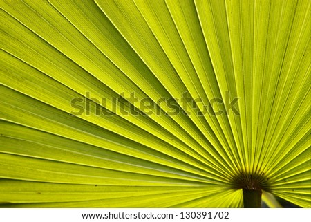 green texture of a palm in bahamas