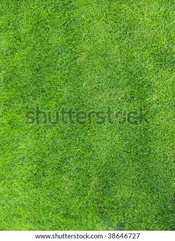 Green texture of grass is in a garden - Shutterstock ID 38646727