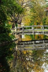 Green tree and bridge reflected in river at Brandywine city park in Wilmington Delaware USA