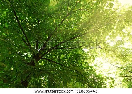 Green tree crown closeup Photo stock ©