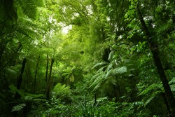 Green tree ferns in tropical jungle