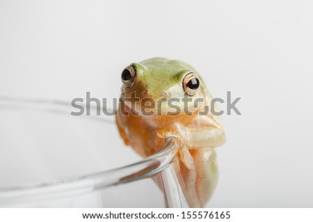 green tree frog in isolation on rim of glass
