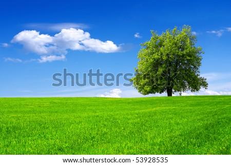 Green tree in a field on blue sky #53928535